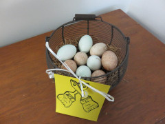 #15 Eggs-tra Cute by Sara Wilson
