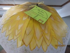 #19 Mellow Yellow donated by Lori Krueger.